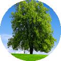 tree.fw